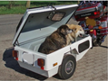 Hunde-Anhänger